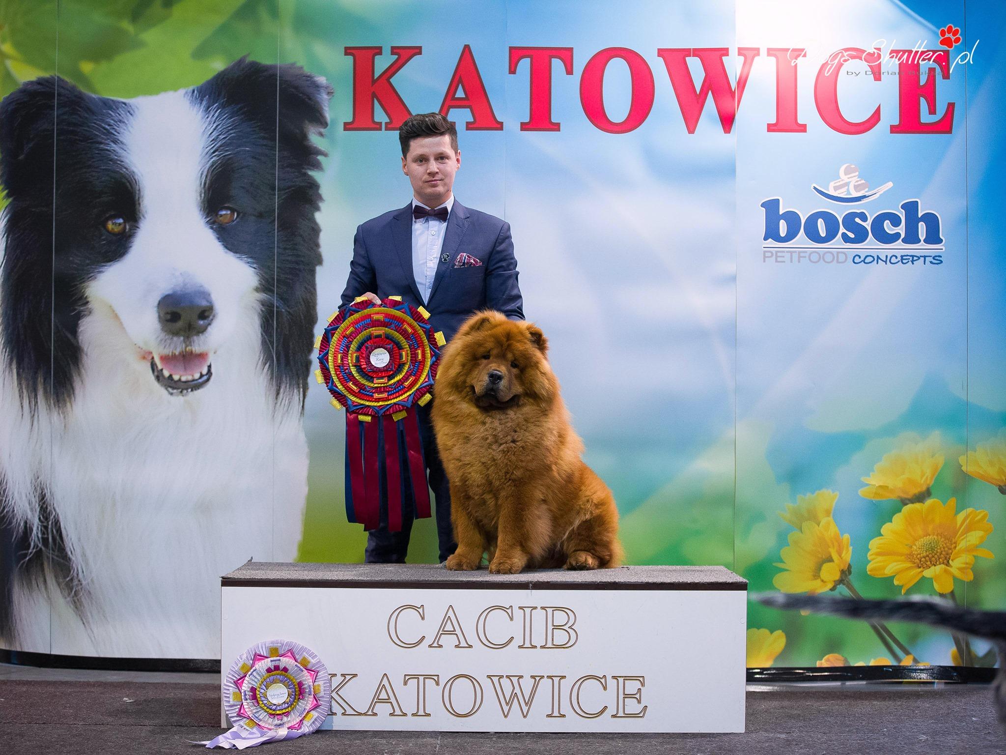 CACIB KATOWICE 2020